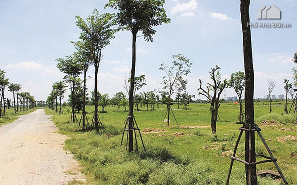 Đất hỗn hợp là gì? Có nên mua đất hỗn hợp hay không?