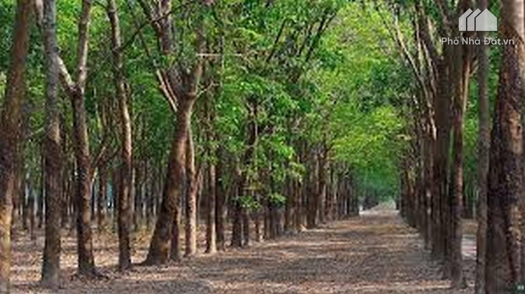 Đất trồng cây lâu năm là gì? Thủ tục chuyển đất trồng cây lâu năm