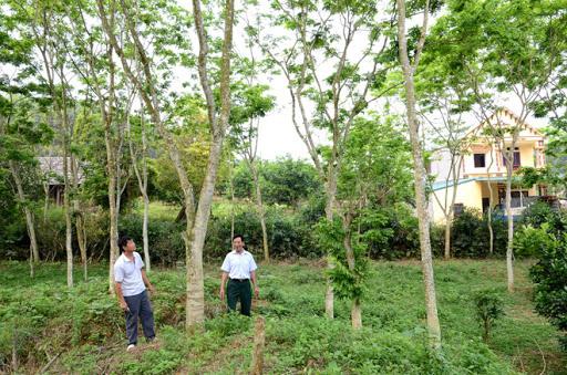 Khi nào đất trồng cây lâu năm được coi là đất vườn?