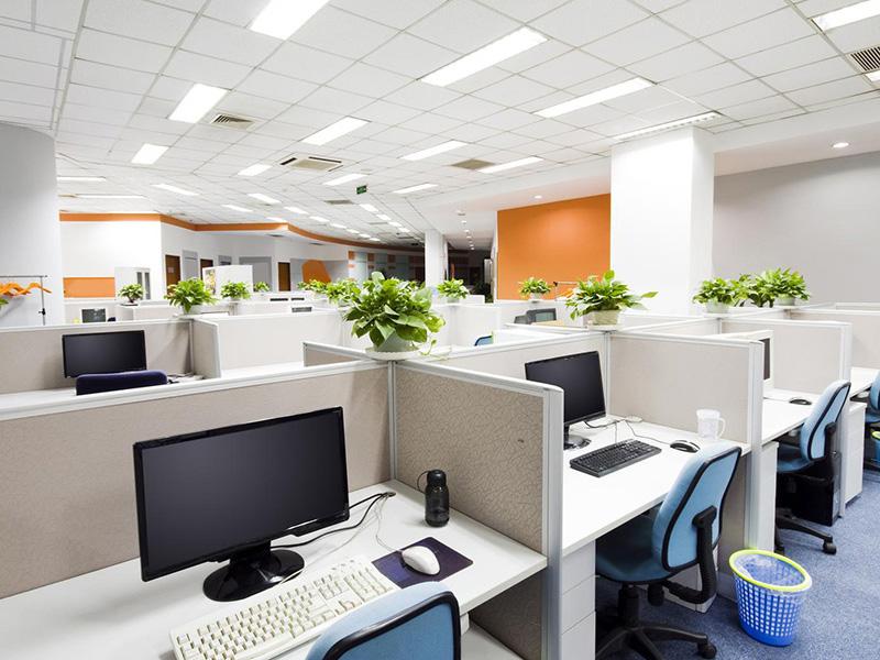 cây để bàn văn phòng